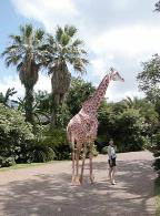 LilJean (Jeanette Powell) and Giraffe at the Houston Zoo
